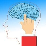 brain-628736__180