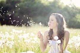 dandelions-609253__180